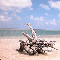 Driftwood on Boca Chita