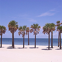 Palm trees on Key Biscayne Beach